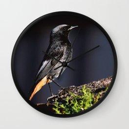 Black Redstart Wall Clock