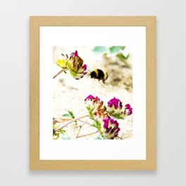 the flight of bumble bee on the dunes I Framed Art Print