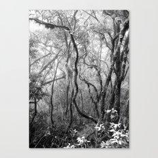 Rainforest No.8 Canvas Print