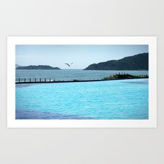 Swimming Pool Gull Art Print
