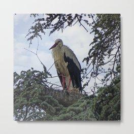 Stork in Tree Metal Print