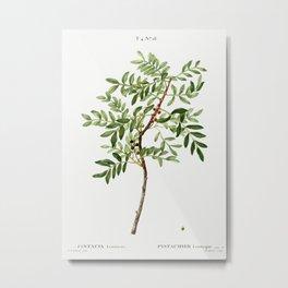 Lentisk, Pistacia lentiscus from Traité des Arbres et Arbustes que l'on cultive en France en pleine Metal Print