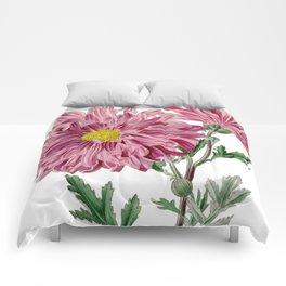 Light Purple Chrysanthemum / W. Curtis 1857 Comforters