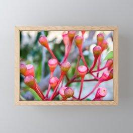 Flowering Gum 1. The Bud Cluster. Australia. Framed Mini Art Print