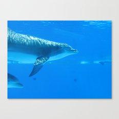 Dolphin II Canvas Print