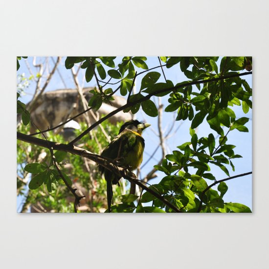 Bird I Canvas Print