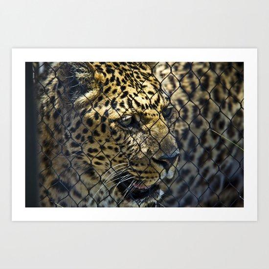 Caged Leopard Art Print