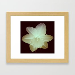 Daffodil 3 Framed Art Print