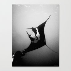 Evading Devil Fish Canvas Print