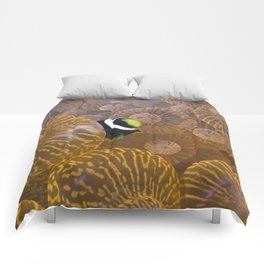 Clownfish in Anemone Comforters