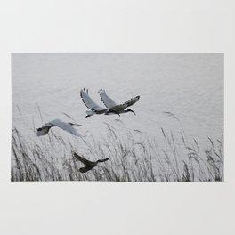 Sacred Ibis in flight Rug