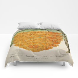 Dendrobium Densiflorum Vintage Botanical Floral Flower Plant Scientific Illustration Comforters