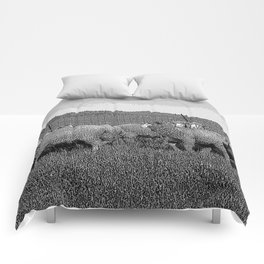 Black & White Sheep in a feild Pencil Drawing Photo Comforters