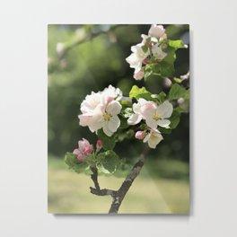 Apple flower 1 Metal Print