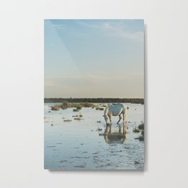 Camargue Horses XXI Metal Print