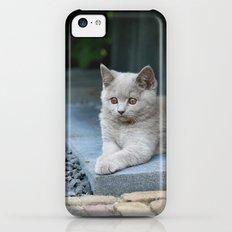 Bikkel the cat ! Slim Case iPhone 5c