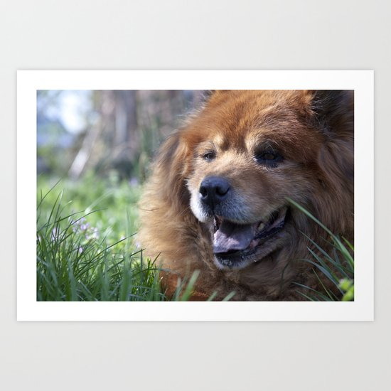 Yogi, the adorable Chow Chow Art Print