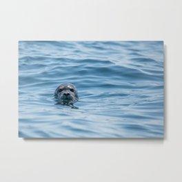 Black Seal Bobbing In Calm Blue Ocean Metal Print