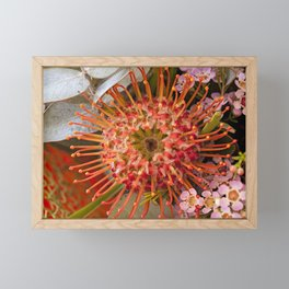 Pincushion Protea Framed Mini Art Print