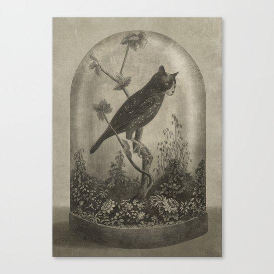 The Curiosity  Canvas Print