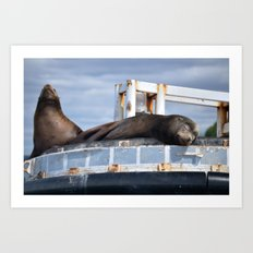 Sea Lion in the Puget Sound Art Print