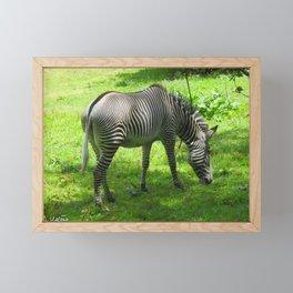Zebra Framed Mini Art Print