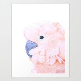 Pink Cockatoo Portrait Art Print