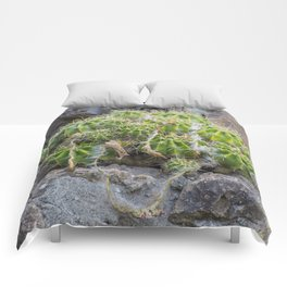Lonely Cacti Comforters