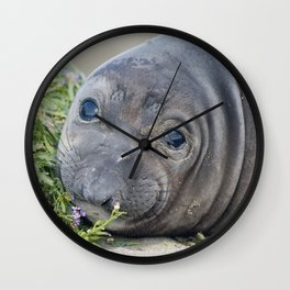 Northern Elephant Seal Pup Wall Clock