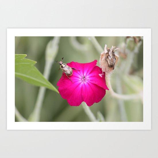 Bug loves Pink Art Print