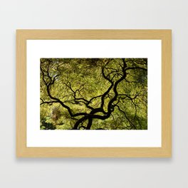 Japanese Maple Tree Framed Art Print
