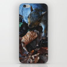 Autumn Squirrel  iPhone & iPod Skin