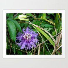 Passion vine flower Art Print