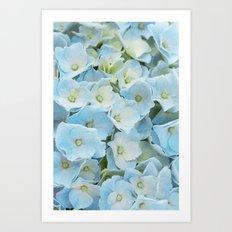 hydrangea Art Print