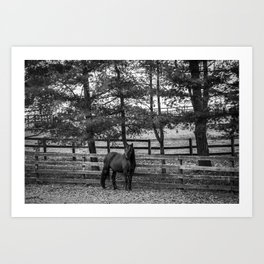 In The Shade Art Print