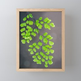 Maidenhair Fern on Gray Framed Mini Art Print