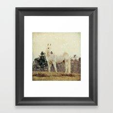 Lone Horse Framed Art Print