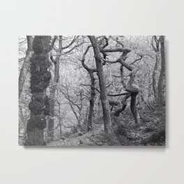 twisted winter forest Metal Print