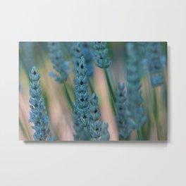 Blue Heather Metal Print