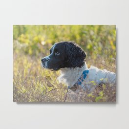 Springer In The Field Metal Print