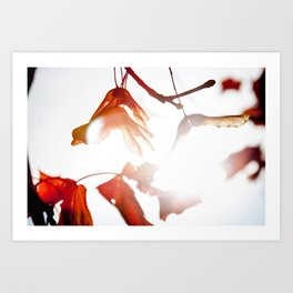 Autumn Sonata III Art Print