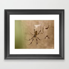 Florida banana Spider Framed Art Print