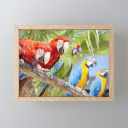 Curious macaws Framed Mini Art Print