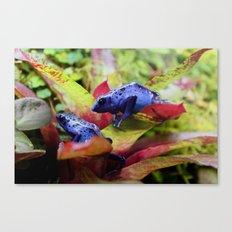 Blue Poison Dart Frogs (Dendrobates Azureus) Canvas Print
