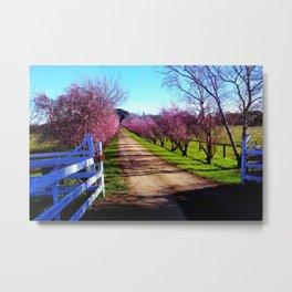 Cherry Blossom Drive Metal Print