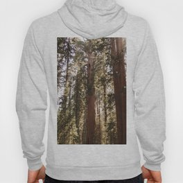 Sequoia National Park XIV Hoody