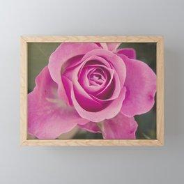 Close up of a rose Framed Mini Art Print