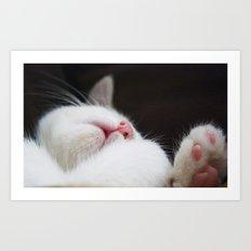 white kitten Art Print