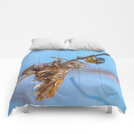Blue tit on branch, Eurasian blue tit, (Cyanistes caeruleus) Cute little Bird Comforters