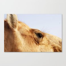 Ready for my close up #2 Canvas Print